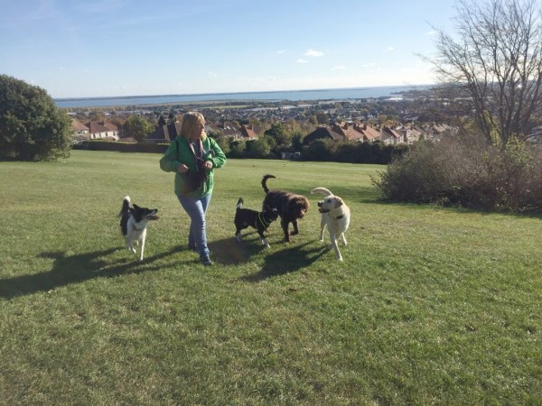 1 hour group walks for dogs